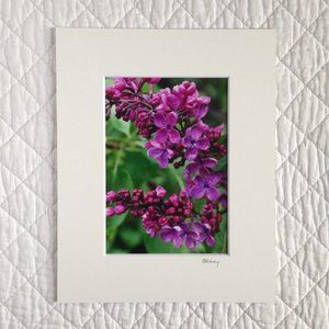 """Lilacs After the Rain"" 5x7 Photography Print"